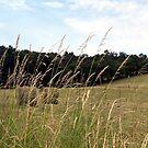 WV hay rolls by Sandra Hopko