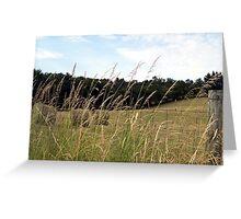 WV hay rolls Greeting Card