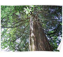 Cedar Tree Center Poster