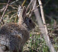 Peter Cottontail? by Melissa  Hintz