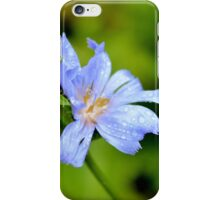 Common Chicory iPhone Case/Skin