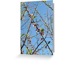 nectarine buds Greeting Card