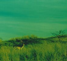 Deer in the dunes - Cross Processed by Debja
