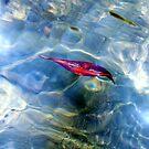 Leaf, River, Bright Sunlight II by Digby