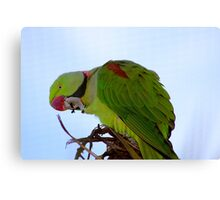 Indian Ring-necked Parrot Canvas Print