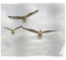 Four Flying Gulls Poster