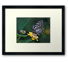 """Not-so-""Common Mime Butterfly Framed Print"