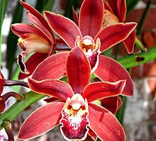 Key West Orchid by Ludwig Wagner