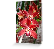Key West Orchid Greeting Card
