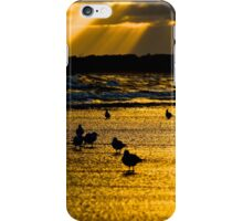 Golden Gulls iPhone Case/Skin