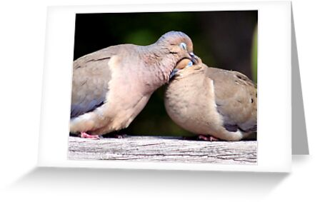 Dove affection  by Earl McCall