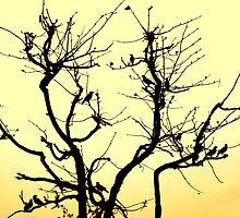 Bird Siesta by Manish Agrawal