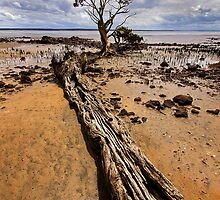 Exposed at low tide by Hans Kawitzki