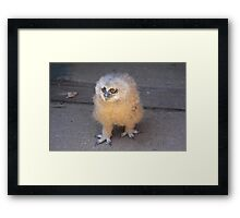 Baby Owl 3 ( one of four ) Framed Print