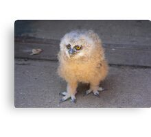 Baby Owl 3 ( one of four ) Canvas Print