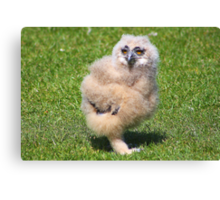 Baby Owl 4 ( one of four ) Canvas Print