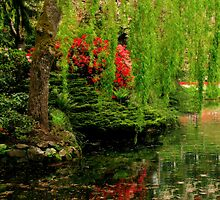 Willow Over Water by Rebecca Cruz