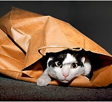Bingbing Loves A Good Bagging! by Mark Ross