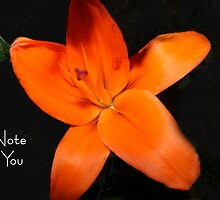 Orange Lilly - A Note For You by Margie Dillow