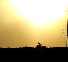 Morning Dove by Stefan Koritar
