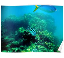 Commonly Seen Tropical Fish Poster
