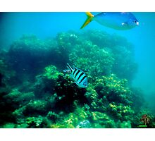 Commonly Seen Tropical Fish Photographic Print