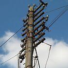 A proper Telegraph Pole by Muncher