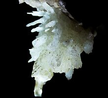 Delicate Aragonite formation in Bunkers hole cave. Devon by ferret