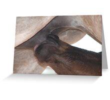 nursing foal Greeting Card