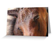 foal face Greeting Card