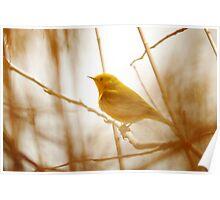 Yellow Warbler - Marsh Grass Poster
