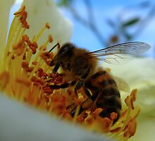 Busy Bee by Sharon Perrett