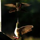 Hummer Aerials by Dennis Jones - CameraView