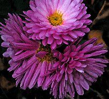 'Watercolour' Chrysanthemums by binjy