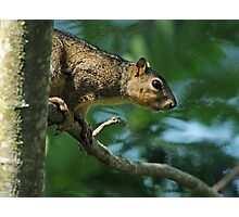 Can't fool a squirrel . . . Photographic Print