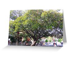 Perth's oldest tree Greeting Card