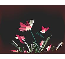 flowers, wind, salmon grass bend Photographic Print