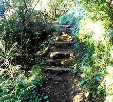 Mt. Warning: The Stone Steps by Jennifer Ellison
