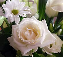 White Rose by Peter Clements