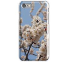 Cherry Blossoms in a Tree (2) iPhone Case/Skin