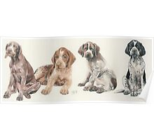 German Short-haired Pointer Puppies Poster