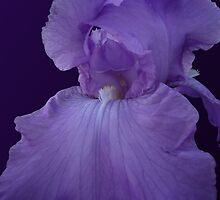 iris indigo by shallay