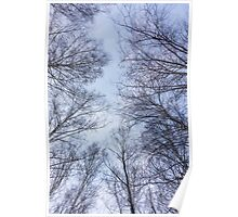 Trees and sky Poster
