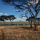 The Swamp - Tarangire National Park - Tanzania by Susana Weber