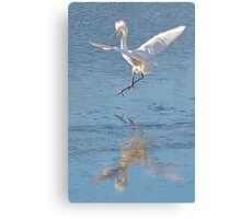 another annoyed Cattle Egret Canvas Print