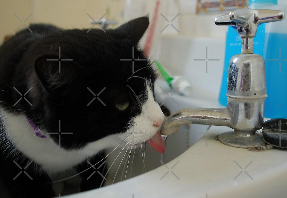 Binky in the Sink by ApeArt