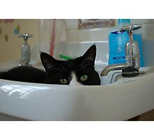 Binky in the Sink Photographic Print