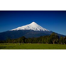 Volcanic Cattle Photographic Print