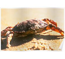 Crab on The Beach Photograph Poster