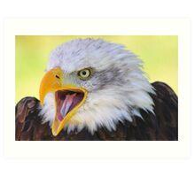 Meet Liberty the american bald eagle Art Print